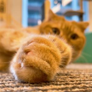 猫は何をしても許される・・・