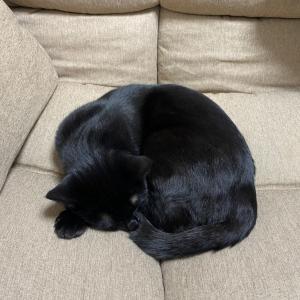 人も猫もダメにするソファ
