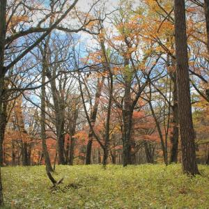 秋色の森で