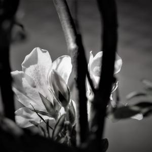 秋に春光る