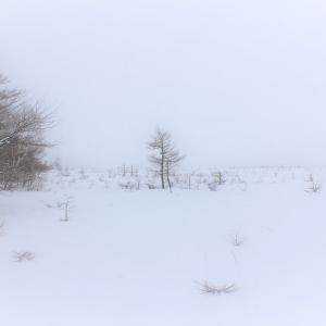 冬風物、雨氷の造形