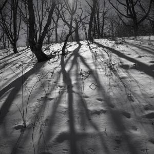 雪、森の陰翳