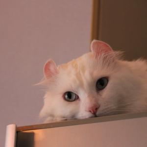 深夜雑談、木曜×休日前夜と猫
