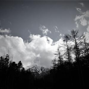 頂雲、霊峰の森から