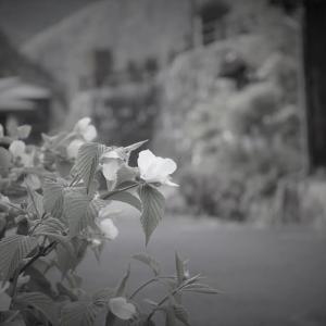 妻籠宿、門前に白く
