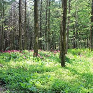 六月の森、秘密の花園