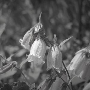 水無月の森、蛍花