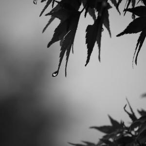 一滴の静謐、水無月