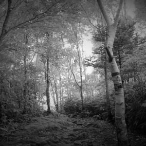 森、時の道