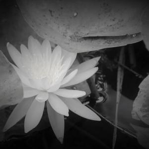 水瀬の花、水無月の森