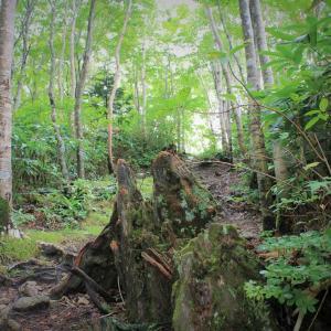 古樹の森で
