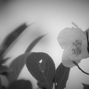 露花の澹、水無月