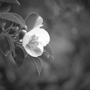 露に花照る、水無月の山