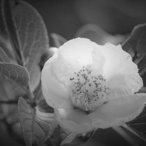 光露の花、水無月の山