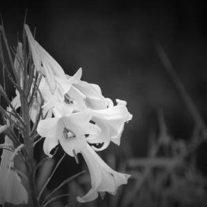 滴る、夏雨の花