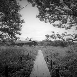 一本の道、森から