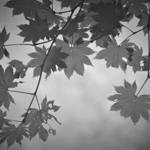 森の切絵、水墨山景