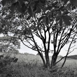 追憶原野×William Wordsworth