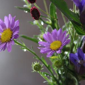 花の秋、紫雫