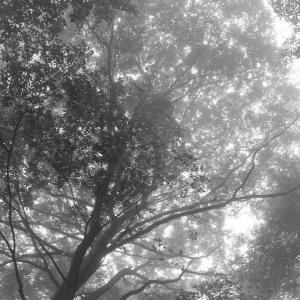 賢者の聲、森×William Wordsworth