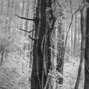 叡智の音、森×William Wordsworth