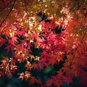 光織る、里山紅葉