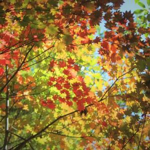 紅葉稜線の色、奥多摩