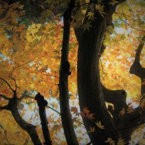 奥多摩の黄葉、御岳山