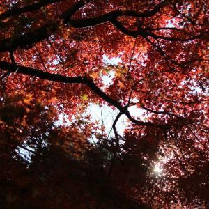 紅深く空、紅葉点景