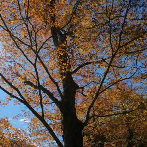 十一月二十五日、金木犀―integrity