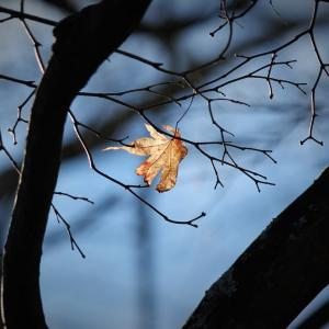 遺秋の葉、紅葉点景