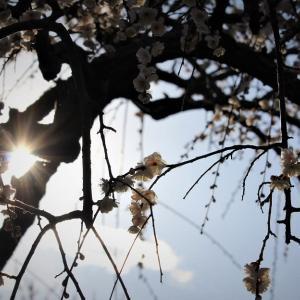 香る羅網、梅の春