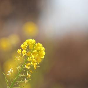春山の色、菜花の春