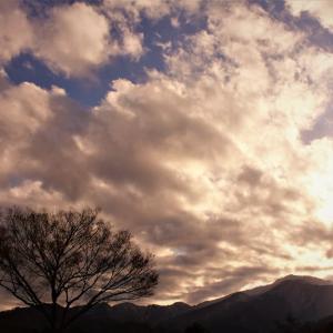 光雲の木、冬の朝