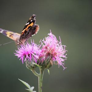 秋舞う、花蝶