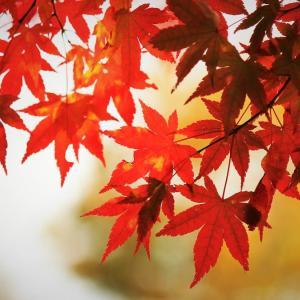 紅簾、奥多摩の秋