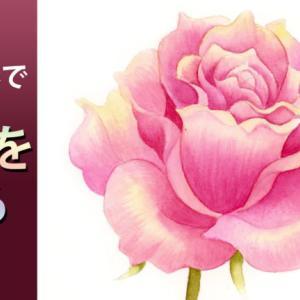 透明水彩絵の具薔薇を描く薔薇(基本編)