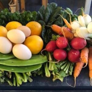 メキシコのティアンギス市場で自然食品を!サンクリはビーガンが多いの?