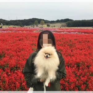 あわじ花さじき♪2019秋