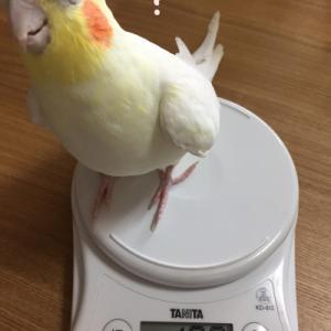 マルと福の体重測定
