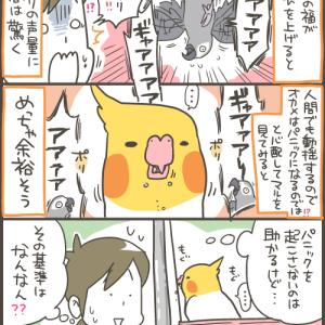 ビビりのオカメの意外な反応