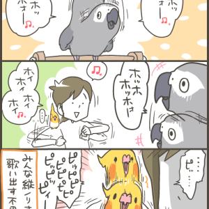 ノリの良い我が家の愛鳥たち