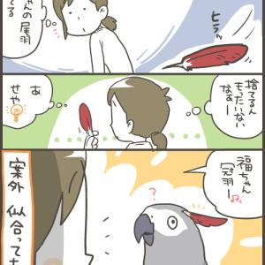 ヨウムと尾羽と付け冠羽