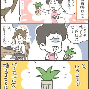 プランターでパイナップルを植えてみた!