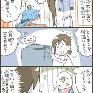 季節の変わり目は老鳥にも厳しいです