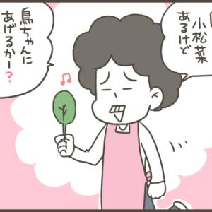 美味しい自家栽培小松菜!