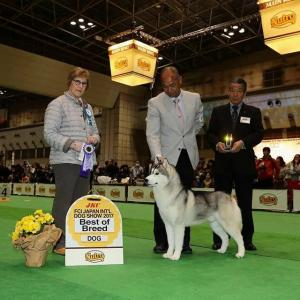 FCI JAPAN INTERNATIONALDOGSHOW 2017