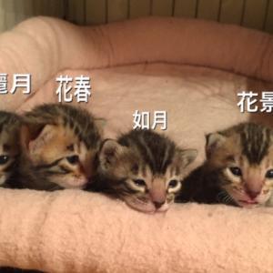 子猫達勢ぞろい☆