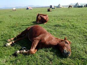 モンゴルの大草原で自分時間を堪能する お一人様歓迎プログラム