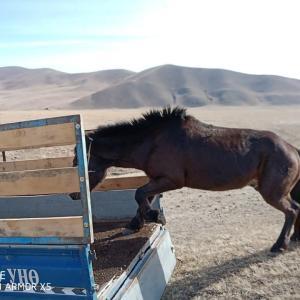 冬支度 騎射馬トリオ、仲間に合流ヘンティーへ